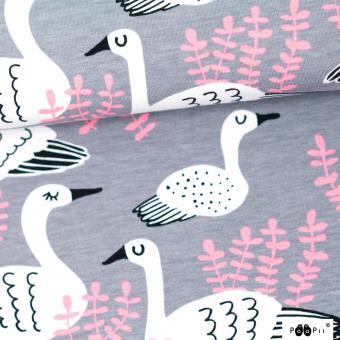 Swan grey