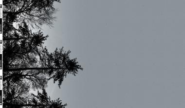 Sweat Wyld Forest Trees grau